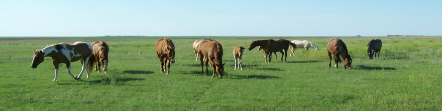 Mares on pasture
